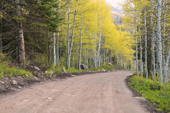 Spring aspens and a dirt road Stock Photo