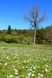 2014 Spring In Ataturk Arboretum Lanscape View Stock Photos