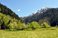 Spring_in_the_Austrian_mountains. Spring in the Austrian mountains with wild flowers and blossom trees Stock Image