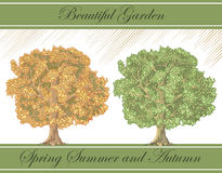 Spring and autumn detailed trees -vector Royalty Free Stock Photo
