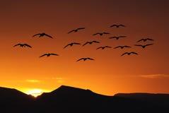 Spring or autumn migration of birds Royalty Free Stock Photos