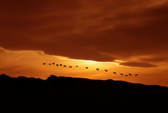 Spring or autumn migration of birds Stock Images