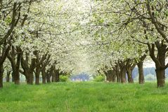 Spring avenue Stock Photography