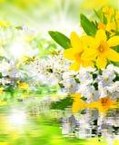 Spring Awakening Stock Photography