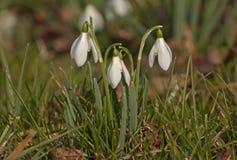 Spring awakening Royalty Free Stock Image