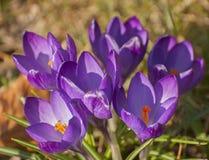 Spring awakening Royalty Free Stock Photos