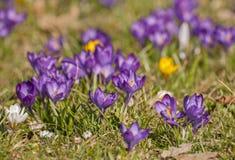 Spring awakening Stock Photo