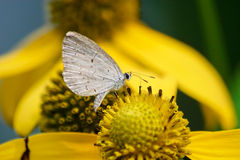 Spring Azure Royalty Free Stock Image
