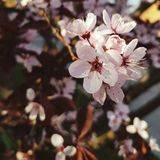 It is spring, babe. Flowers, flowers everywhere Royalty Free Stock Photos