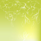 Spring background. With white flowers Stock Photography