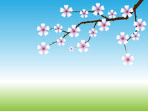 Spring background Royalty Free Stock Image