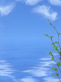 Spring background. Stock Image