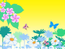 Spring background. Field colour on meadow with butterfly Royalty Free Stock Photos