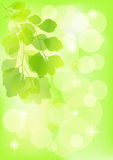 Spring  background. Royalty Free Stock Photography