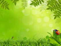 Spring background Royalty Free Stock Photos