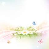 Spring background. Abstract background with chamomiles and butterflies, illustration stock illustration