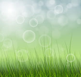Spring background. Abstract spring green background blurry Royalty Free Stock Image