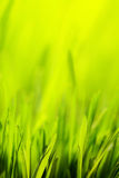 Spring background. Abstract spring green nature background Stock Photo