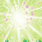 Spring background. Sunshine, fresh green, flowers, petals, young grass, light wind Stock Photo