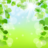 Spring background Stock Images