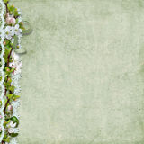 Spring background with apple flowers and lace Royalty Free Stock Photos
