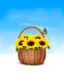Spring background. Basket full of sunflowers and a butterfly. Stock Photos