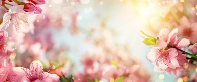 Spring background with beautiful cherry blossoms stock photo