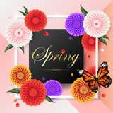 Spring background among beautiful colorful dahlia flower,  Stock Images