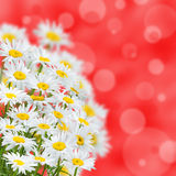 Spring background Stock Photography