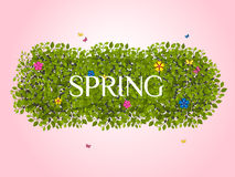 Spring background_5 Royalty Free Stock Image
