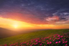 Spring background with beautiful landscape with flowers at sunset. Spring background with beautiful landscape with flowers at beautiful sunset stock photo