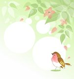 Spring background with bird. Background with leafs, blossom and redbreast Stock Photography
