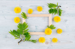 Spring background of blank wood frame, yellow dandelion flowers, young green leaves on light blue wooden board. Stock Photography