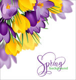 Spring background with blooming spring flowers, crocuses. Vector Royalty Free Stock Photography