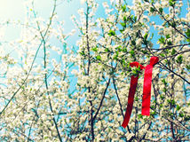 Spring background, blossom branch plum, red silk ribbon. Holiday May Day, selective focus stock photo