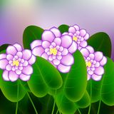Spring background with blossom brunch of african violets flowers. Illustration Royalty Free Stock Images
