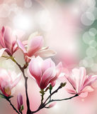 Spring background with blossom brunch of Magnolia with blurry effect. Vector. Spring background with blossom brunch of Magnolia with blurry effect. Template royalty free illustration