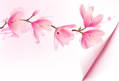 Spring background with blossom brunch of pink flowers. Royalty Free Stock Photo