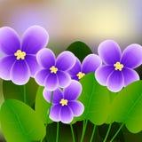Spring background with blossom brunch of violet flowers. Illustration Stock Image