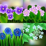 Spring background with blossom brunch of violet flowers. Illustration Royalty Free Stock Photos