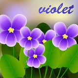 Spring background with blossom brunch of violet flowers. Vector. Illustration Royalty Free Stock Image
