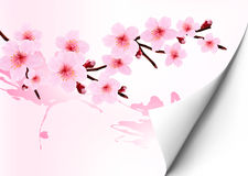 Spring background with a blossoming sakura branch. Royalty Free Stock Images