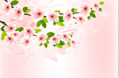 Spring background with blossoming sakura branches. Royalty Free Stock Photo