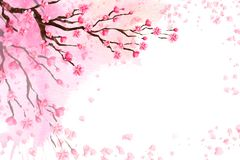 Spring background with a blossoming Sakura. royalty free stock images
