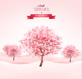 Spring background with blossoming sakura trees. Royalty Free Stock Photos