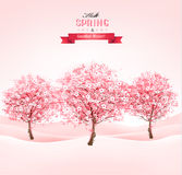 Spring background with blossoming sakura trees.  Stock Images