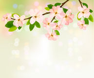 Spring background with blossoming tree. Brunch with spring flowers. Vector illustration Stock Photography