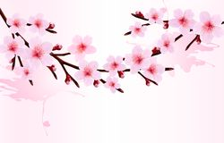 Spring background of a blossoming tree branch with Stock Photos