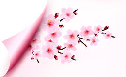 Spring background of a blossoming tree branch with Stock Image