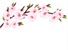 Spring background of a blossoming tree branch with Stock Photography